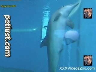 Professionals diver films how dolphin swims in the huge pool