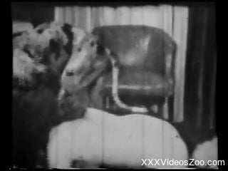 Vintage bestiality sex with a sensual hottie and her Dalmatian