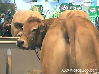 Take a look at sexy cow ass and anus, they are looking awesome