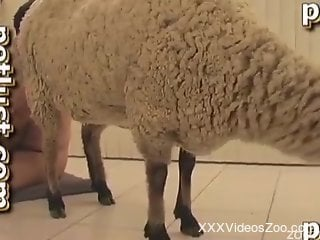 Sheep with tight anus got nicely nailed by passionate farmer
