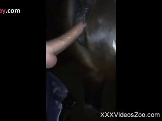 Perfect black horse got nicely fucked in a tight anal hole
