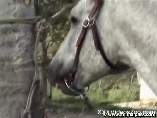 Awesome zoophilic sex compilation with dogs and farm animals