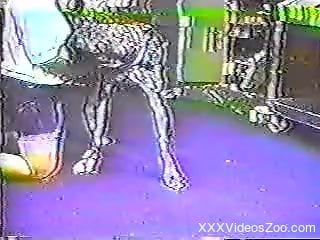 Dalmatian and other dogs are banging a big-bottomed zoofil