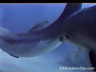 Watching and filming how two big dolphins fucking in the ocean