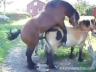 Stallions fucking makes the delight of this horny dude