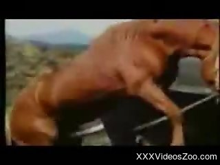 Guy feels aroused when seeing horses fucking