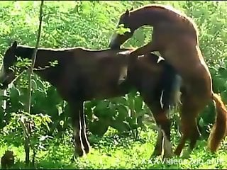 Two horses going crazy, fucking each other outdoors
