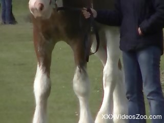 Voyeur-style bestiality porn video with a stallion