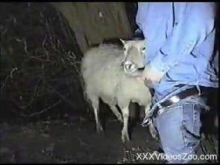 Horny farmer fucking a sheep's warm mouth on camera