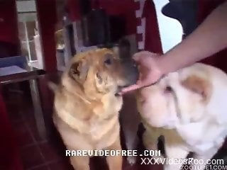 Blonde with saggy tits getting ruined by her dogs