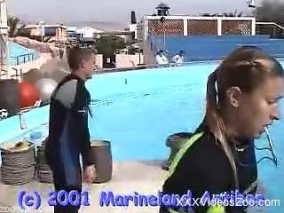 Dolphin showing off his sexy cock in the water