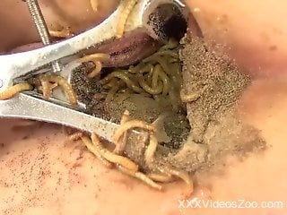 Latina in sexy lingerie shoving worms in her cunt