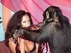 Animal Porn Link